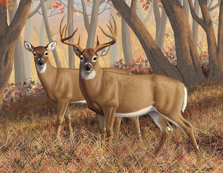 whitetail-deer-painting-fall-flame-crista-forest