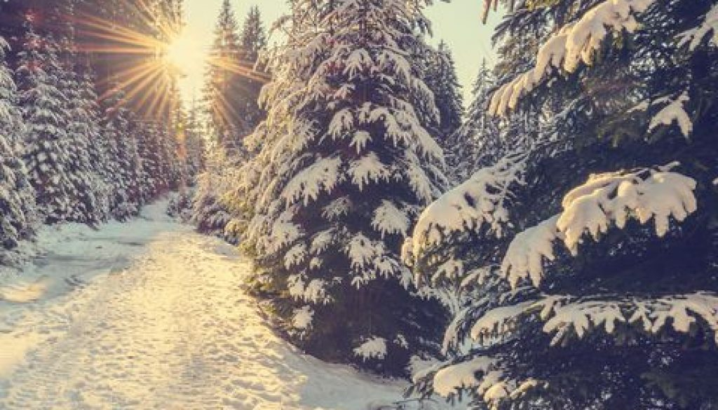 snow-covered-pine-trees-on-sunset-royalty-free-image-615101076-1541521490