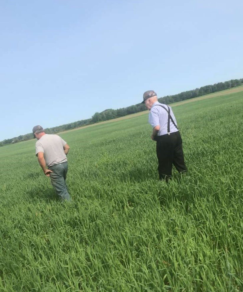 Grandpa in the Wheat